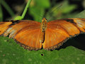 Butterfly_IMG_3705-DPC