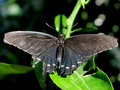 Butterfly_IMG_3690-DPC