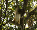 belize_newriver_4_MG_2029