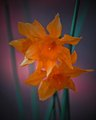 ColorFlower_edited-1.jpg
