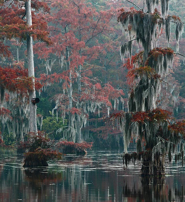 Spanish Moss and Fall Colors