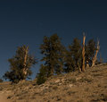 Brisclecone Pines Full Moon-2929