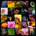 31 Days of Flowers