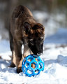 Kimber with her ball
