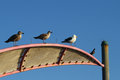 Gulls and pigeon