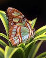 butterfly-print
