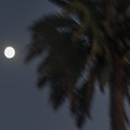 Full Moon and Palm Tree
