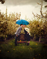 Orchards in the Rain