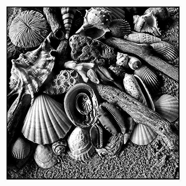 Day 29 - Seashells