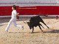 Course Camargueaise, bloodless french bullfighting
