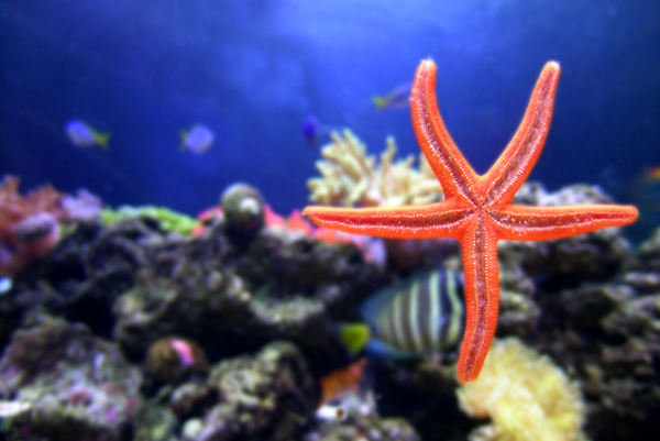 Starfish Suspension