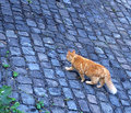 DSC_0007-walks-by-himself.jpg