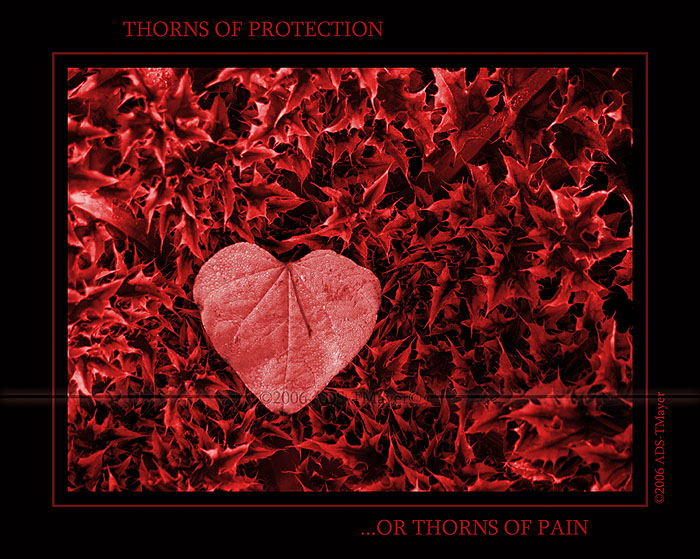 My heart in the thorns
