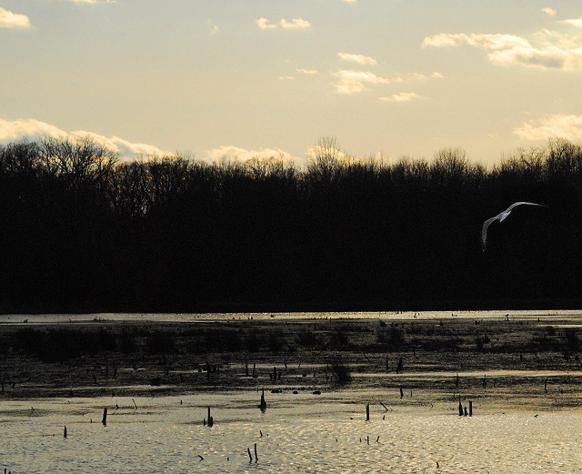 Wetlands, Late Afternoon