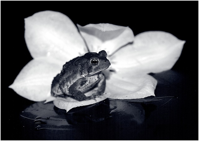 Toad on a Floral Throne (Outtake 4)