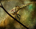 day 17. december slice of life. dragonfly