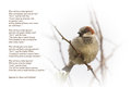 Apr 01 - Who will love a little Sparrow?
