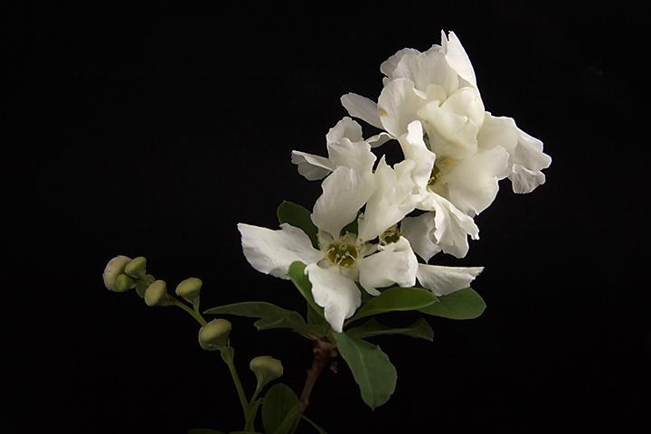 April 20 - White flower