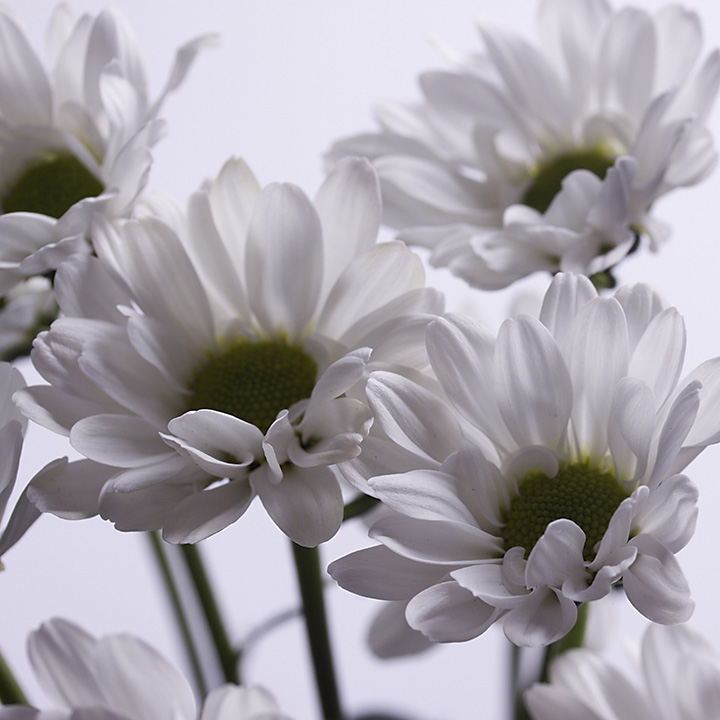 May 25 - White on white
