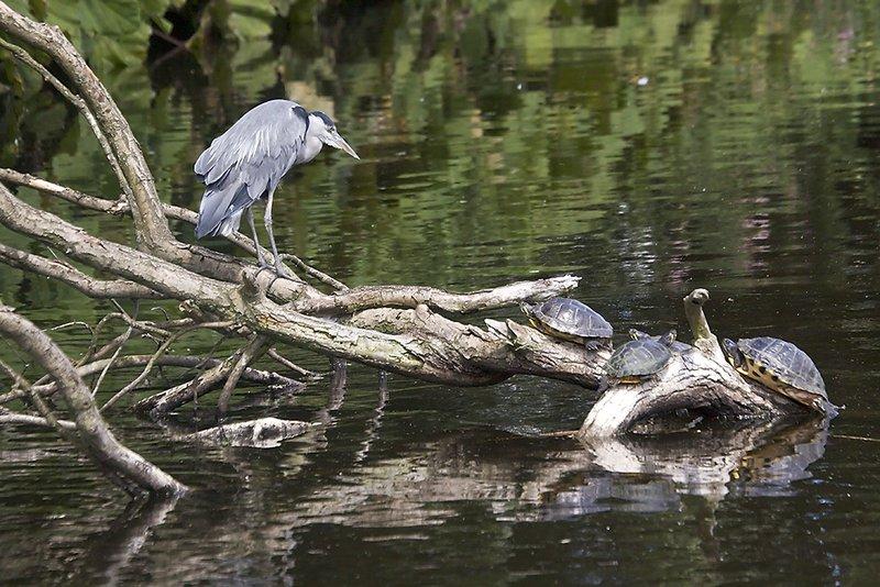 Jul 20 - Turtles?