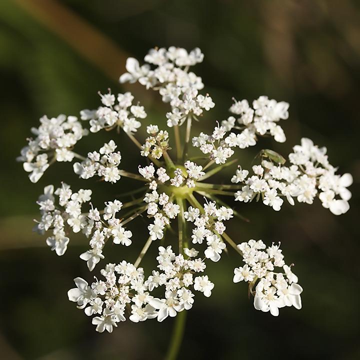 Aug 13 - Flower