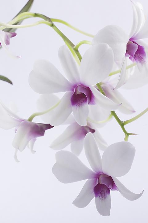 Aug 22 - Orchids