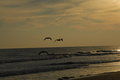 Three Gulls in to the Sunset