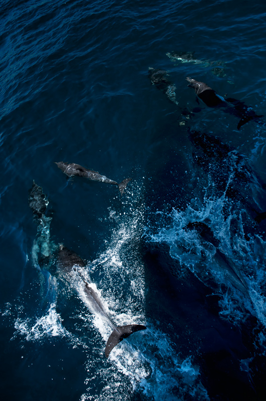 lots-of-dolphins-lr-DSC_0266