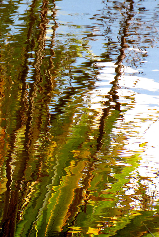 Flax Reflections